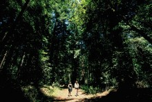 Two campers walk among the huge redwood trees of the 70's boyscout camp where Camp Grounded took place.